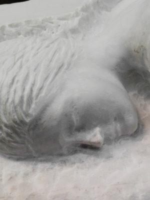 dolce dormire particolare della testa